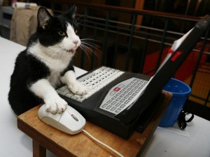 CatComputer2